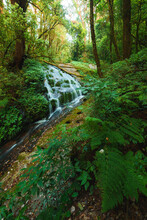 Kew Mae Pan, Waterfall In Hill Evergreen Forest Of Doi Inthanon, Chiang Mai, Thailand
