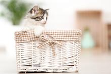 Cute Kitten Sitting In Basket