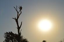 Avvoltoi In Agguato