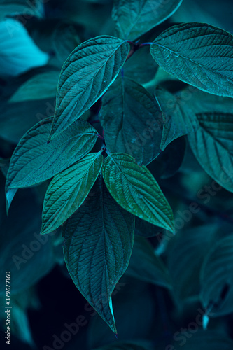 different plant leaves in summer and autumn, texture for the background