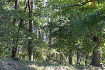 Nature background forest