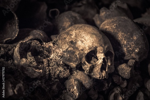 Cuadros en Lienzo Decaying skull