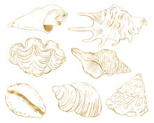 Watercolor Underwater Set With Gold Sea Shells. Hand Painted Underwater Element Illustration Isolated On White Background. Aquatic Illustration For Design, Print, Fabric Or Background.
