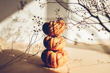 Tine Orange Pumpkins. Autumn C...