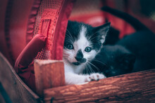 Adorable Timid Black And White...