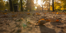 Photo From Below Along The Alley On A Walking Path At Sunset In Wilanow Park Poland In Autumn