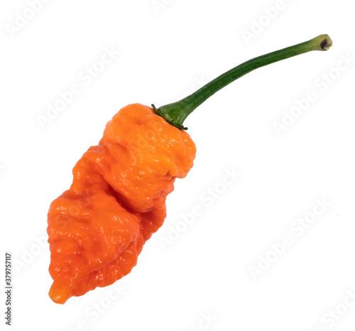 Death Spiral super hot pepper variety pod over white background Fototapete