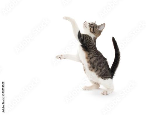 Cute tabby kitten on white background Fotobehang