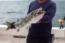 A Fishing Charter Guide Holds ...
