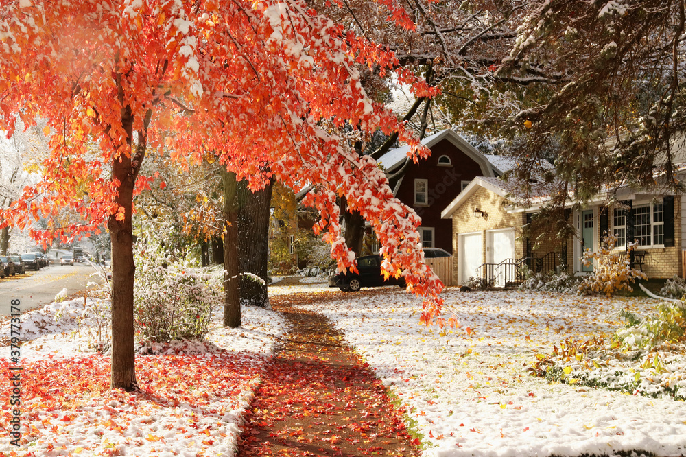 Fototapeta Early snow background, climate changing concept. Scenic morning landscape with autumn bright color trees and street covered by fresh first snow in the private houses residential neighborhood.