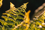 Fern leaves in bright sunlight over blurred background