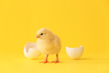 Cute Hatched Chick On Color Ba...