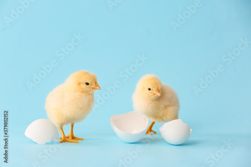 Cute hatched chicks on color background Fototapeta