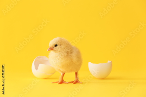 Valokuva Cute hatched chick on color background