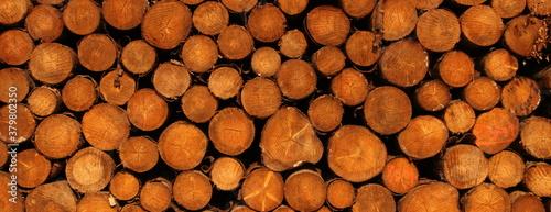 Fototapeta a freshly felled wooden pile in the forest