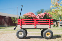 Red Wagon Full Of Flowers On A Farm
