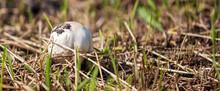 Edible Mushroom Grows In The F...