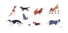 Set Of Different Dog Vector Fl...