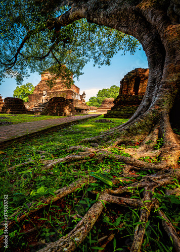 Fototapeta Ancient Buddha statue with tree at Wat Mahathat temple in Sukhothai Historical Park, Thailand