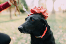 A Dog With A Christmas Bow On It's Head