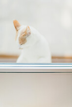 Blurry Sight Of Cat Behind Glass
