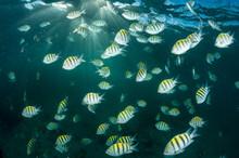 Fish Gathering
