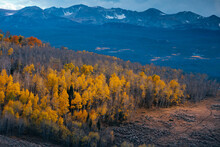 A Mountainside In Brilliant Hues Of Gold As The Aspens Turn During The Height Of Autumn
