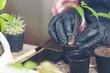 Closeup picture of Gardener's Hands Planting Plant