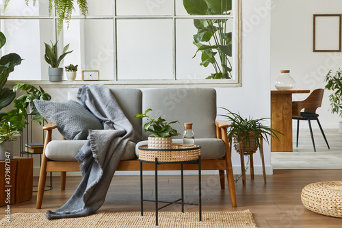 Fototapeta Modern scandinavian interior of living room with design grey sofa, armchair, a lot of plants, coffee table, carpet and personal accessories in cozy home decor. Template. obraz