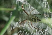 Cobweb Or Spider's Web Against...