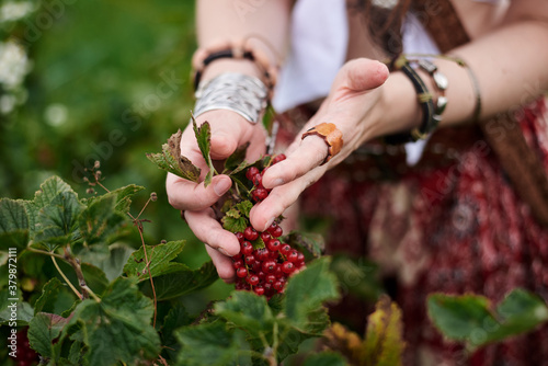 Young hippie woman, wearing boho style clothes, picking up red currant berries on green field Close-up picture of female hands Fototapet