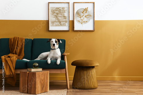 Fotografía Stylish interior of living room with design furniture, gold pouf, plant, mock up poster frames, carpet, accessoreis and beautiful dog lying on the sofa in cozy home decor