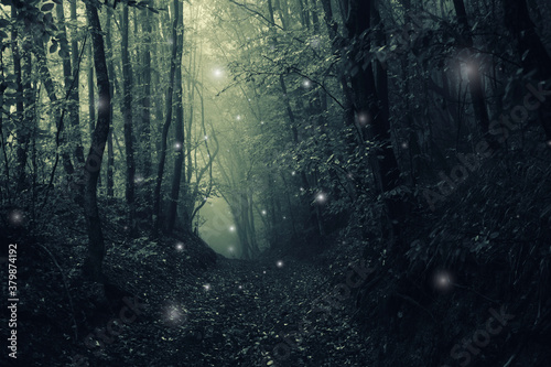 Fototapeta magical forest path, mysterious halloween landscape obraz