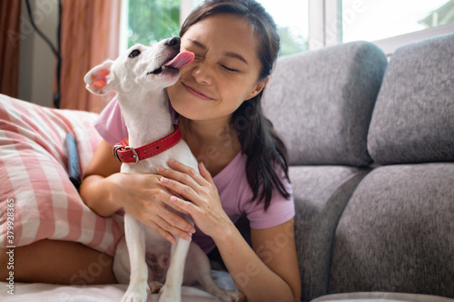 Fotografía Jack russell terrier dogs lick owner face to show its love in living room
