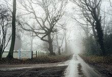 Small Country Road Through Trees In Fog. Norfolk, UK.