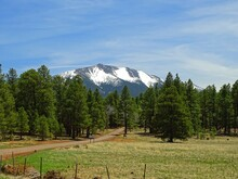 North America, United States, Arizona, Flagstaff, Humphreys Peak