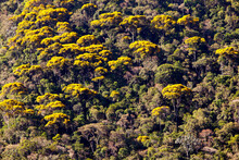 Rainforest Texture With Golden...