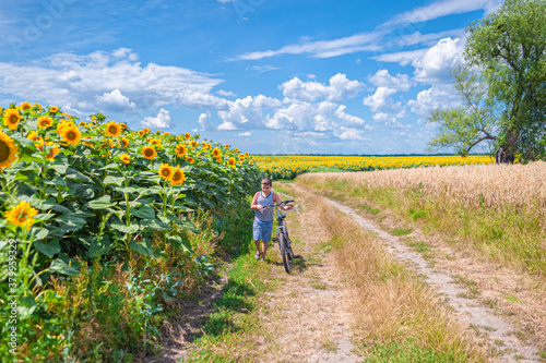 Fototapeta A young boy in a T-shirt and shorts with a bicycle walks along a rural road between a field of sunflowers and trees in the forest obraz