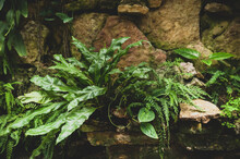 Tropical Plants And Ferns Grow...
