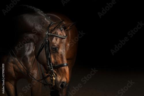 Fotografie, Tablou Portrait of a sport dressage horse