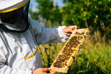 Apiarist Inspecting Honeycomb ...
