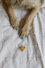 Paws And Dog Treat