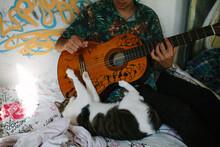 Cat Playing Guitar.