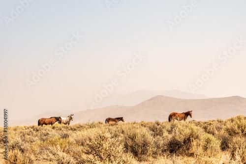wild horses in Nevada desert Wallpaper Mural