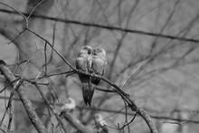 Two Birds In Tree