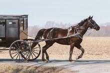 Horse Drawn Amish Buggy
