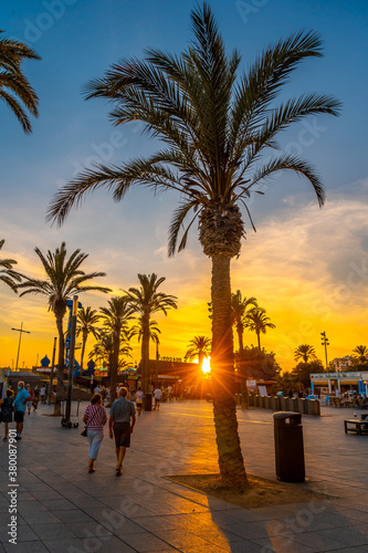 Promenade with palm trees at sunset in the coastal town of Torrevieja, Alicante, Valencian Community Wallpaper Mural