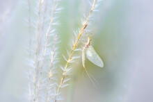 White Moth On A Plant Macro