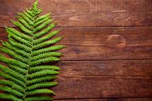 Green Fern Leaf Lies On Brown ...