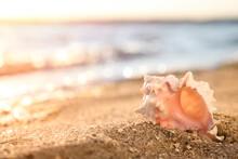Beautiful Sea Shell On Sandy B...
